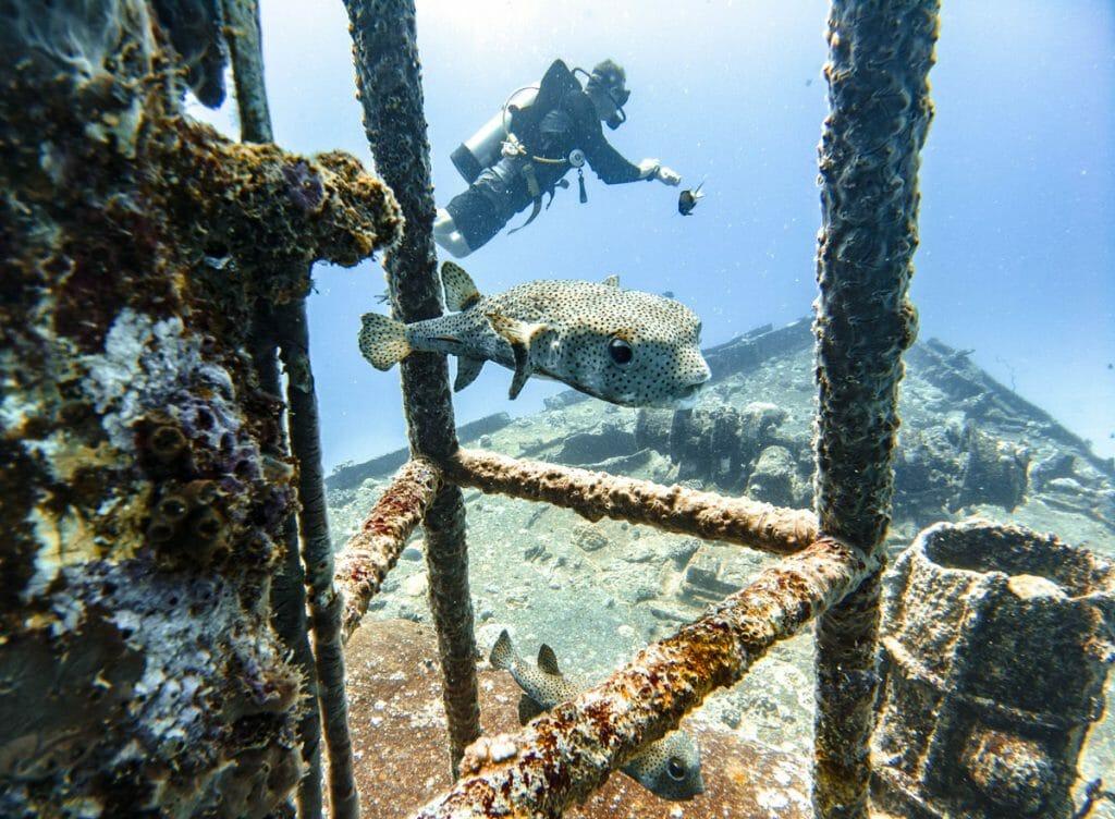 Stella Maru Wreck in Mauritius