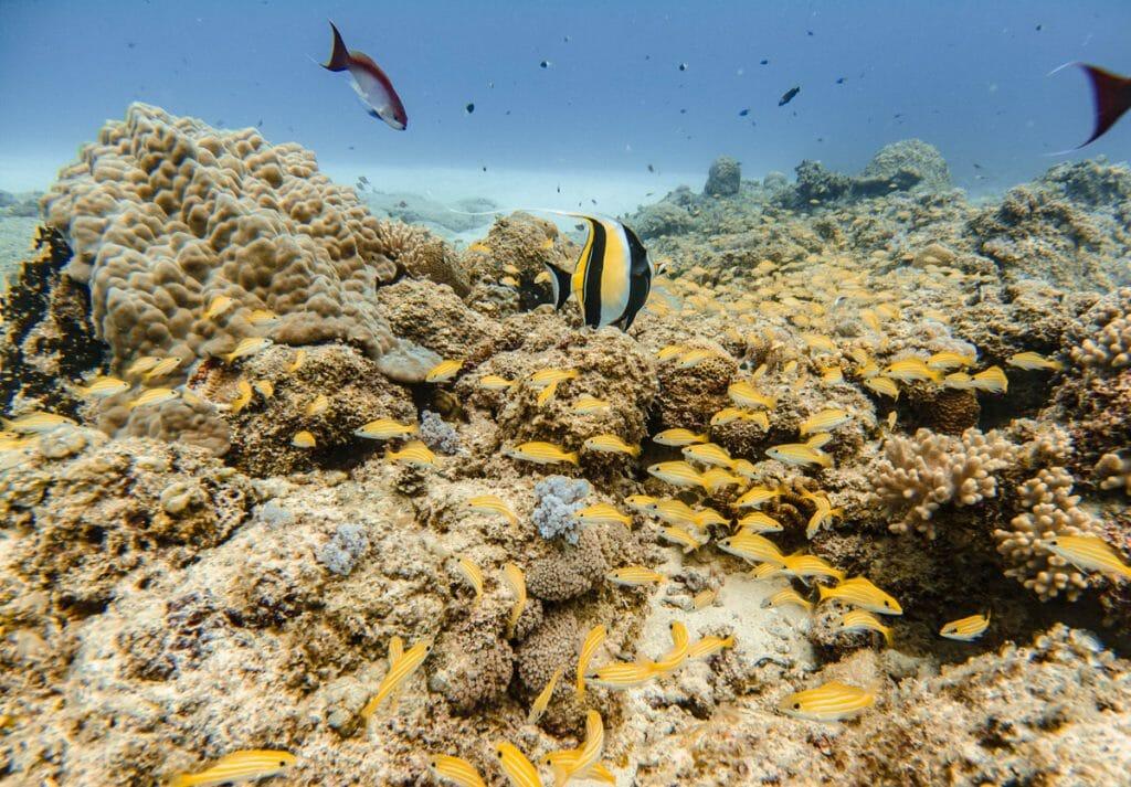 Ti Corail dive site in Mauritius
