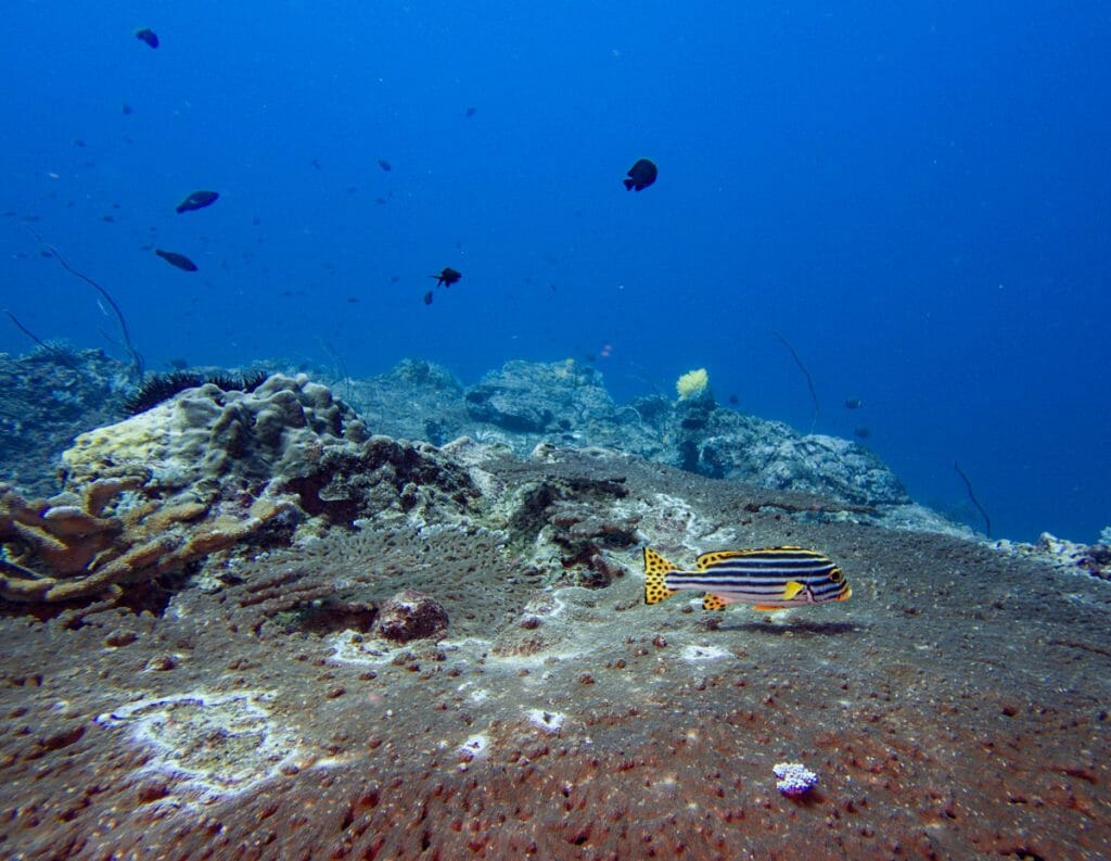 colorful fish at koh bon reef
