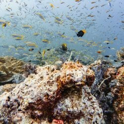 Fish at Tachai dive site