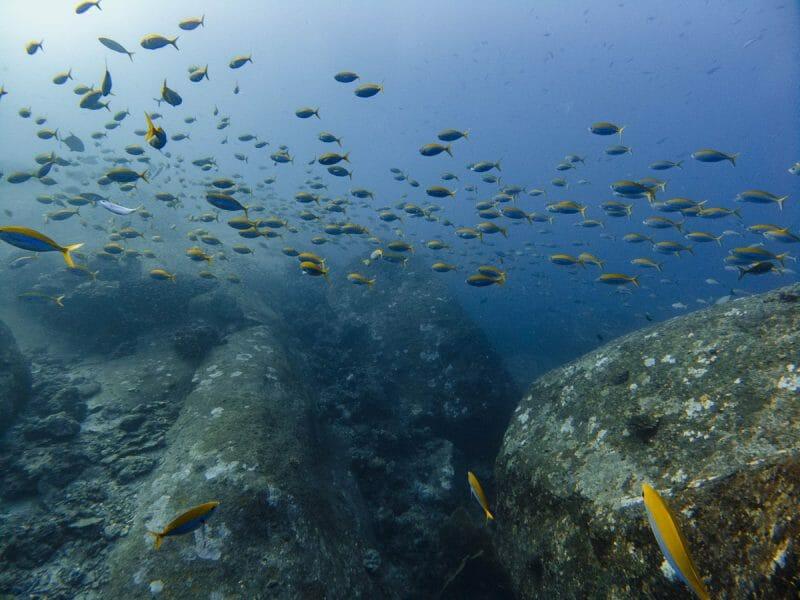 school of fish at tachai pinnacle dive site