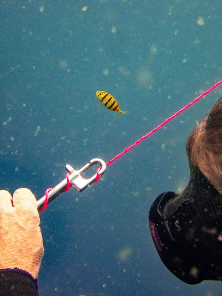 Clip with pink line and yellow fish