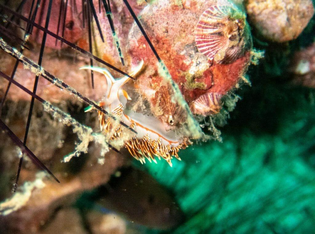 Nudibranch in Koh Tao