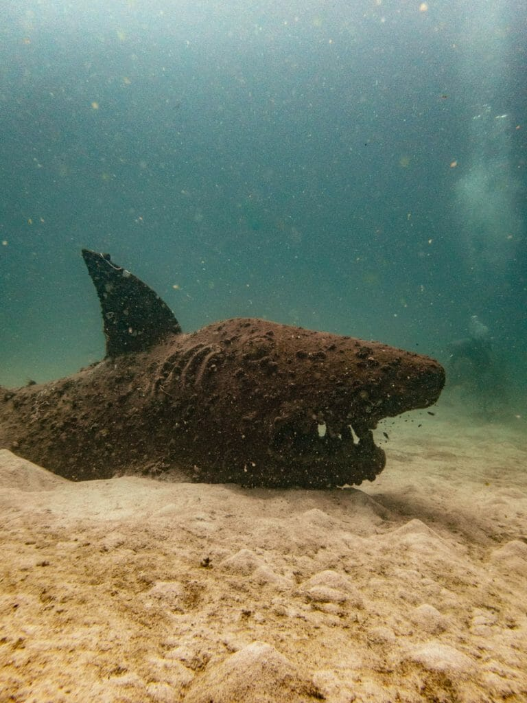 Concrete shark at Buoyancy World