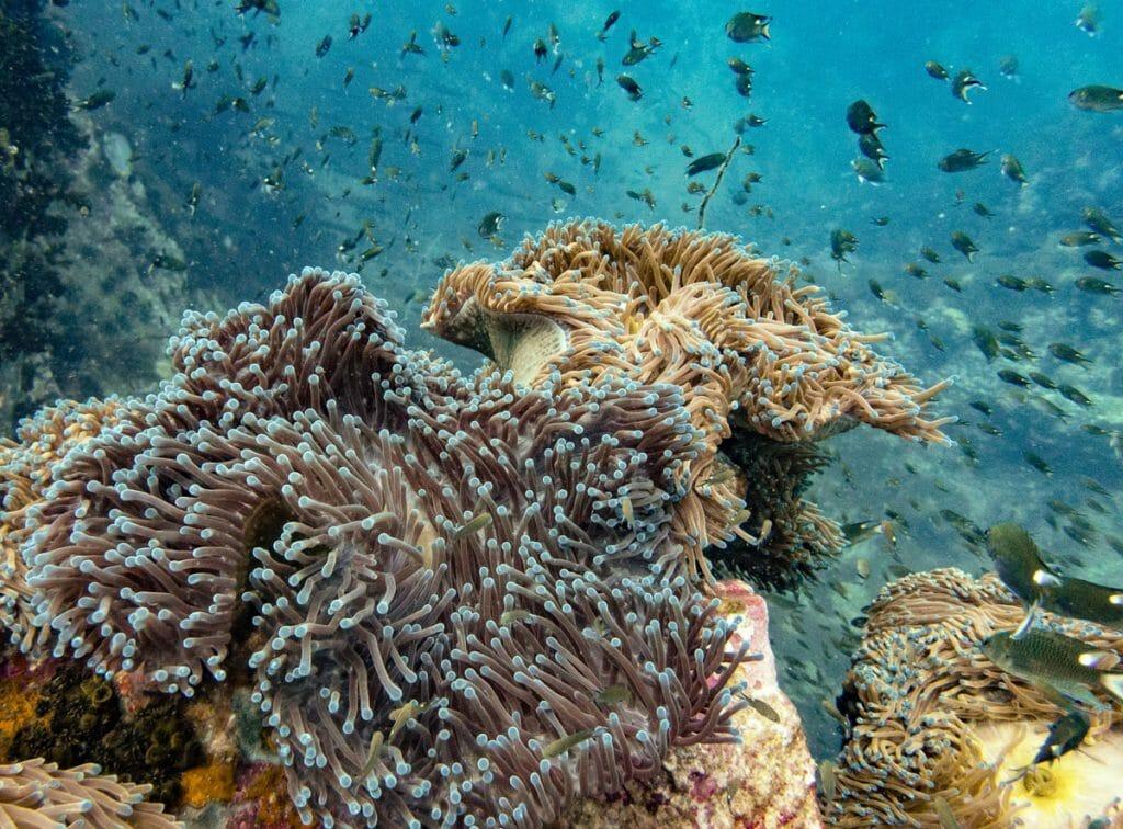 Corals and fish at Southwest Pinnacle