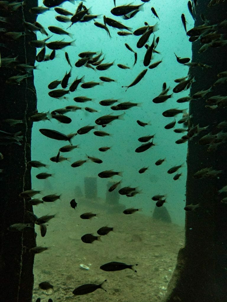 Entrance with fish of Sattakut wreck