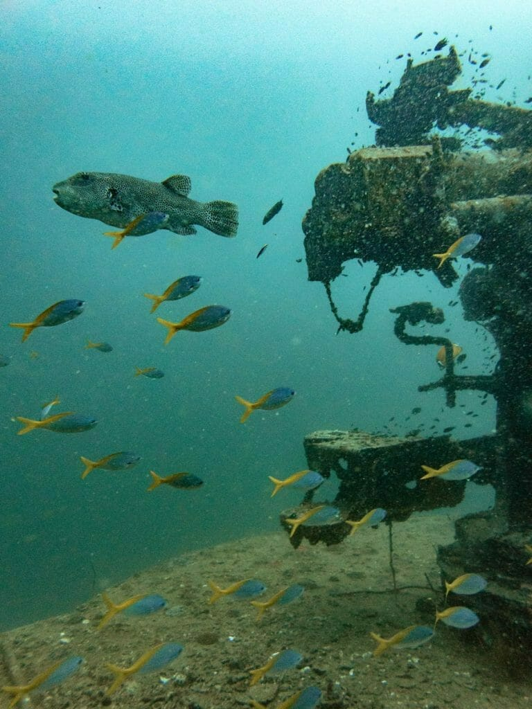 Pufferfish and details of wreck in Koh Tao